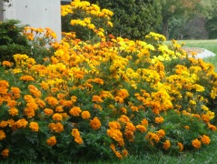 Fall Flowers Photo by livingandlovinglifeafter50