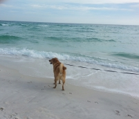 Chewie on the beach, Gulf of Mexico
