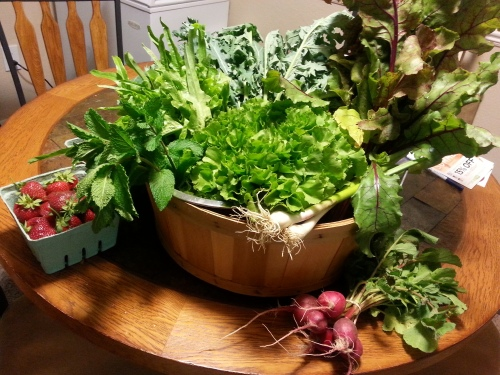 CSA from Eaton's Creek Organics